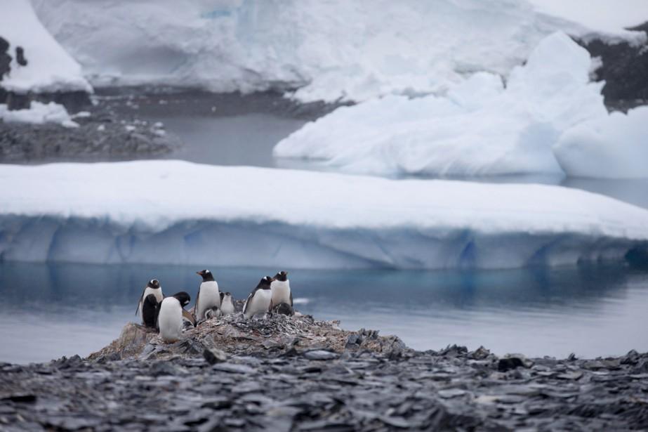 Pilier de l'écosystème antarctique, le krill est un... (PHOTO NATACHA PISARENKO, ARCHIVES AP)