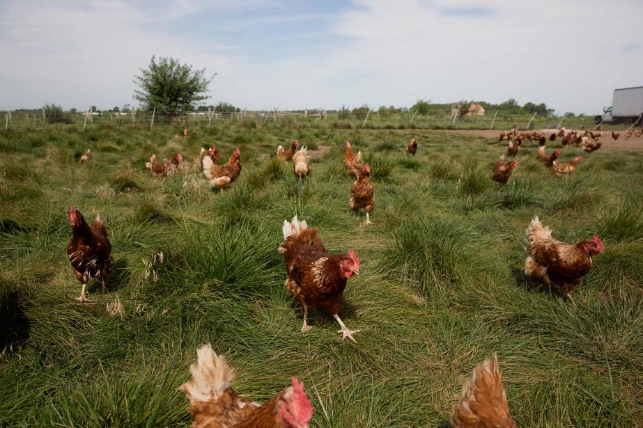 Au Québec, la limite imposée aux agriculteurs qui... (ARCHIVES BLOOMBERG)