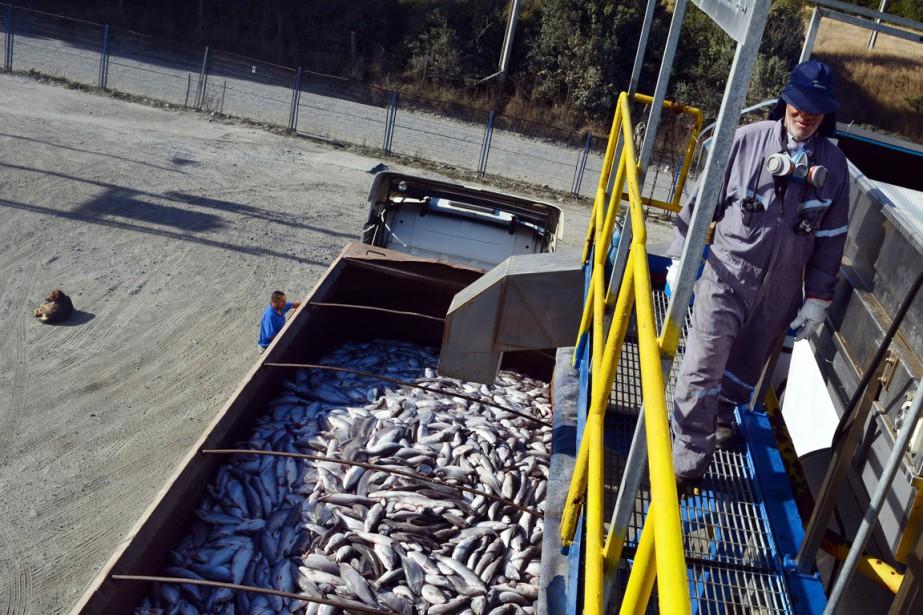 Avec 800000 tonnes par an et un chiffre... (PHOTO JAIME PEA, ARCHIVES AFP)