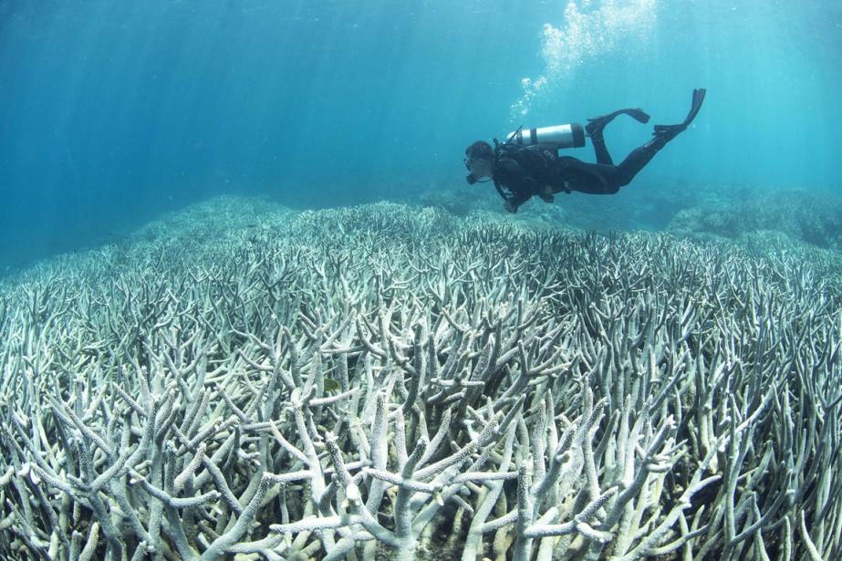 Des observations aériennes et des inspections sous-marines ont... (PHOTO AFP)