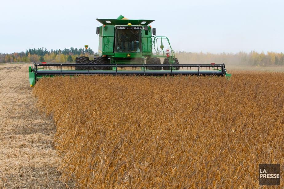 La culture de soya OGM a nettement reculé... (Photo Archives La Presse)