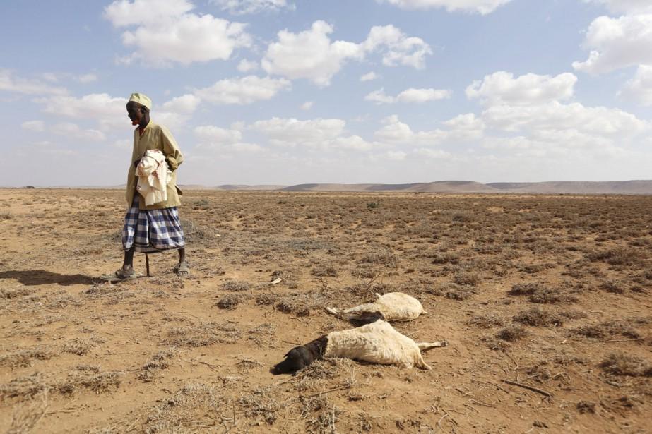 Un homme passe à proximité de deux moutons... (PHOTO FEISAL OMAR, ARCHIVES REUTERS)