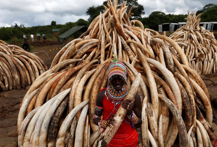 Le trafic d'ivoire, dont le commerce est interdit... (Photo Reuters)
