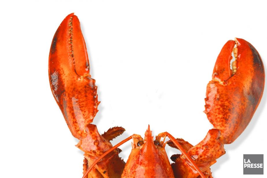 Comment manger votre homard? Pas de panique: voici... (PHOTOMONTAGE LA PRESSE)