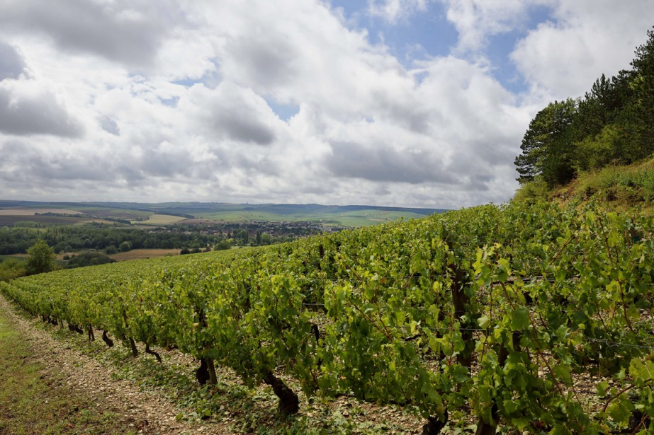 Une partie du vignoble chablisien, dans... (PHOTO ERIC FEFERBERG, ARCHIVES AFP)