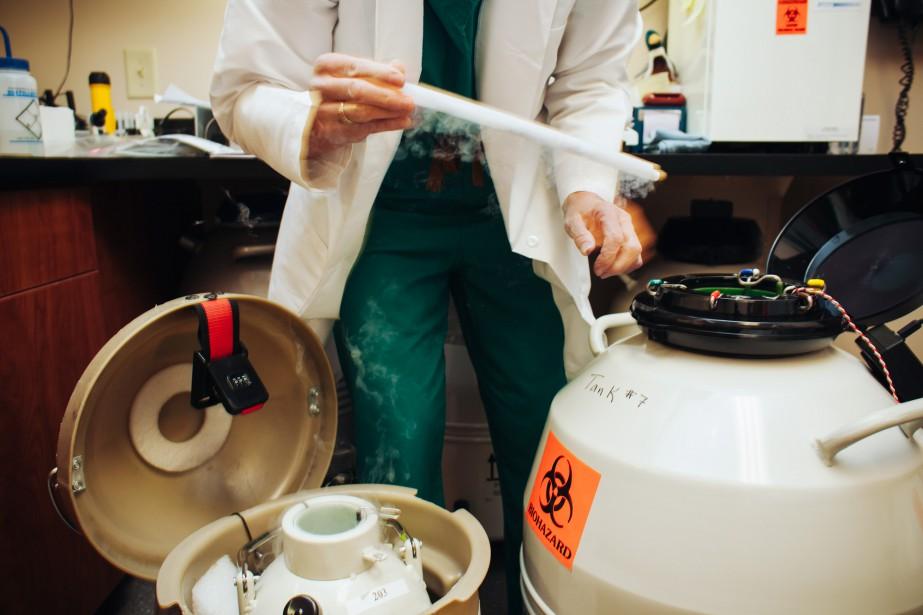 Une embryologiste transfère des embryons congelés dans une... (PHOTO SHAWN POYNTER, ARCHIVES THE NEW YORK TIMES)