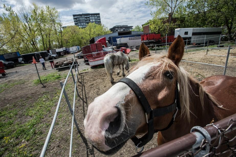 Les chevaux de l'écurie Lucky Luc, propriété de... (Photo Olivier Pontbriand, La PResse)