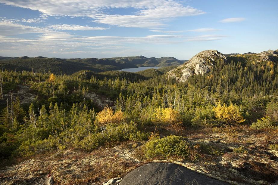 Greenpeacedénonce l'exploitation de la forêt des Montagnes blanches,... (PHOTO FOURNIE PAR GREENPEACE)