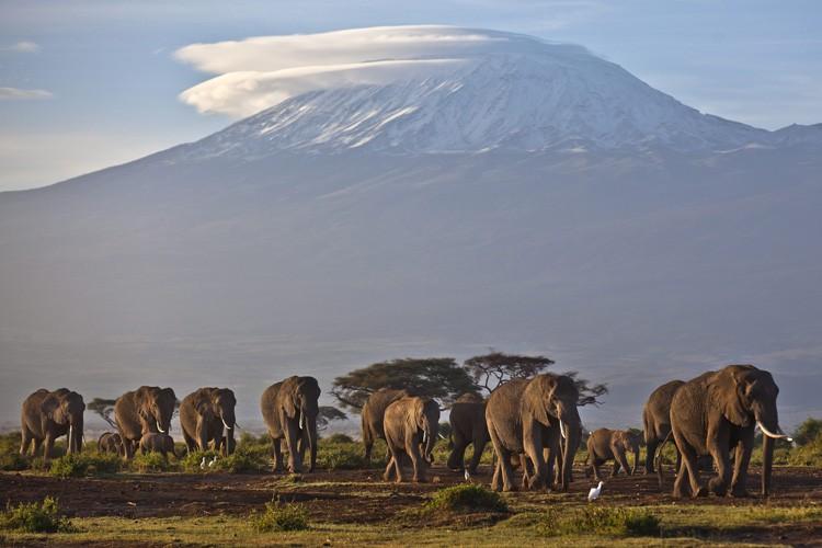 Environ 30 000 éléphants d'Afrique sont abattus chaque... (ARCHIVES AP)