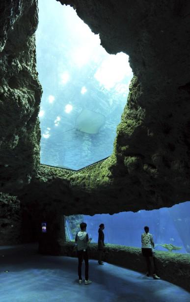 Le parc est doté d'un vaste aquarium. (AFP)