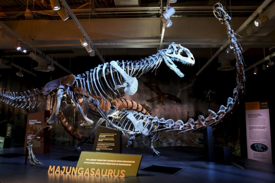 L'exposition <em>Formidables dinosaures</em> est présentée au Musée canadien de la nature jusqu'au 5 septembre. (Patrick Woodbury, LeDroit)