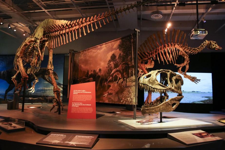 <em>Formidables dinosaures</em> met en vedette 16 squelettes complets, tout aussi impressionnants que certaines parties de la bête exposées séparément - crâne monumental, tibia démesuré... (Patrick Woodbury, LeDroit)