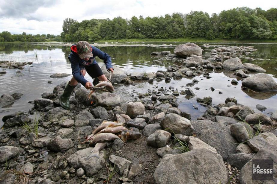 Un expert d'Urgence-Environnement croit que la diminution exceptionnelle... (PHOTO ROBERT SKINNER, LA PRESSE)
