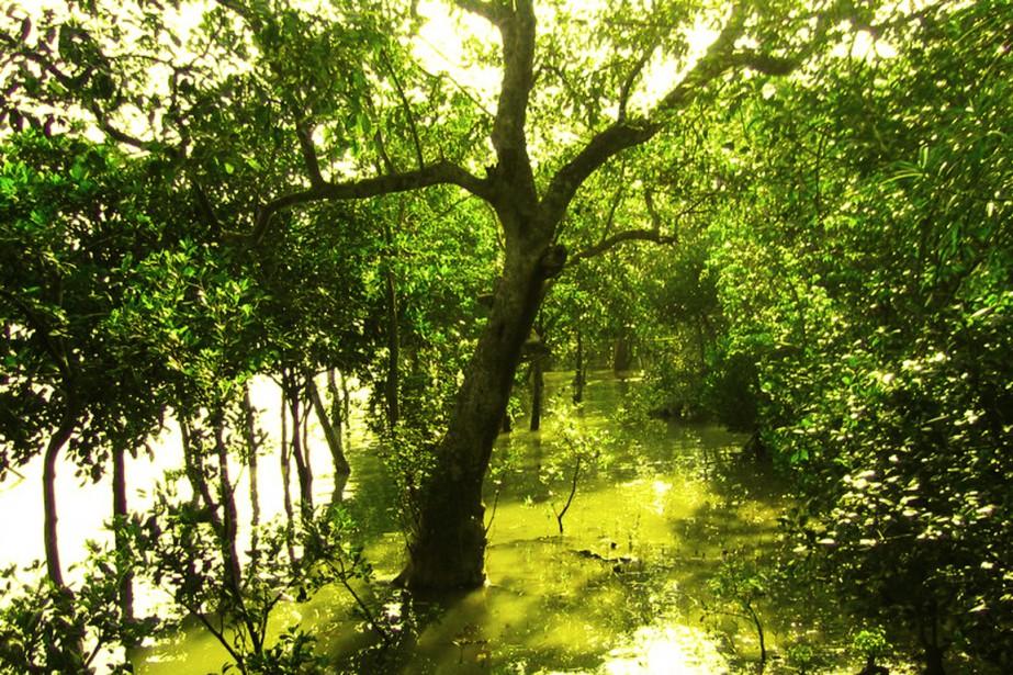 Situés à l'embouchure du Gange et du Brahmapoutre,... (PHOTO WIKIPÉDIA)
