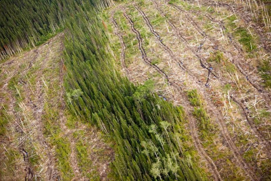 Les coupes forestières ne cessent de monter vers... (Photo archives La PResse)