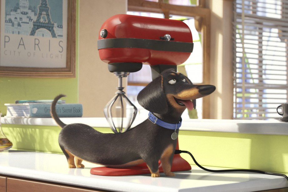 The Secret Life of Pets a récolté 103,2 millions... (PHOTO FOURNIE PAR UNIVERSAL PICTURES)