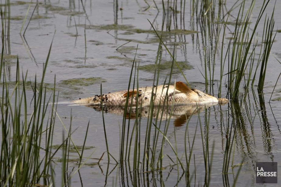 Le déversement d'eaux usées qui a tué des... (PHOTO ROBERT SKINNER, LA PRESSE)