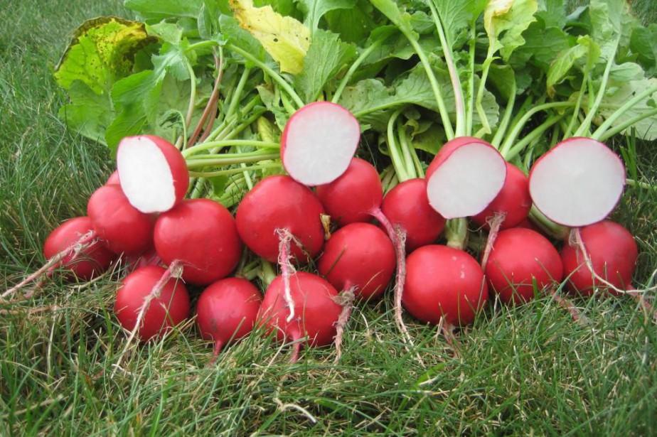 Les radis peuvent être semés même si l'été... (Photo All America Selections)