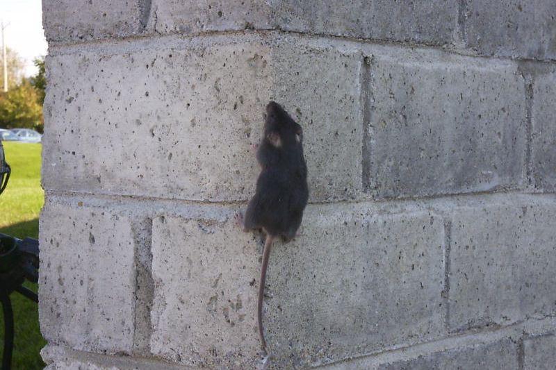souris dans une maison free banque souris maison with souris dans une maison nous avons donc. Black Bedroom Furniture Sets. Home Design Ideas