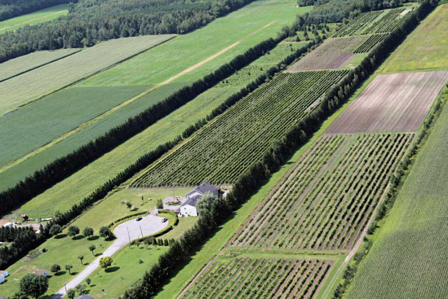 Vue aérienne du Domaine Carone, en 2011.... (Photo François Roy, archives La Presse)