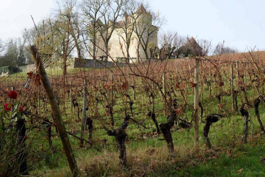 Depuis quelques années, les producteurs de vin de... (PHOTO RÉMY GABALDA, ARCHIVES AGENCE FRANCE-PRESSE)