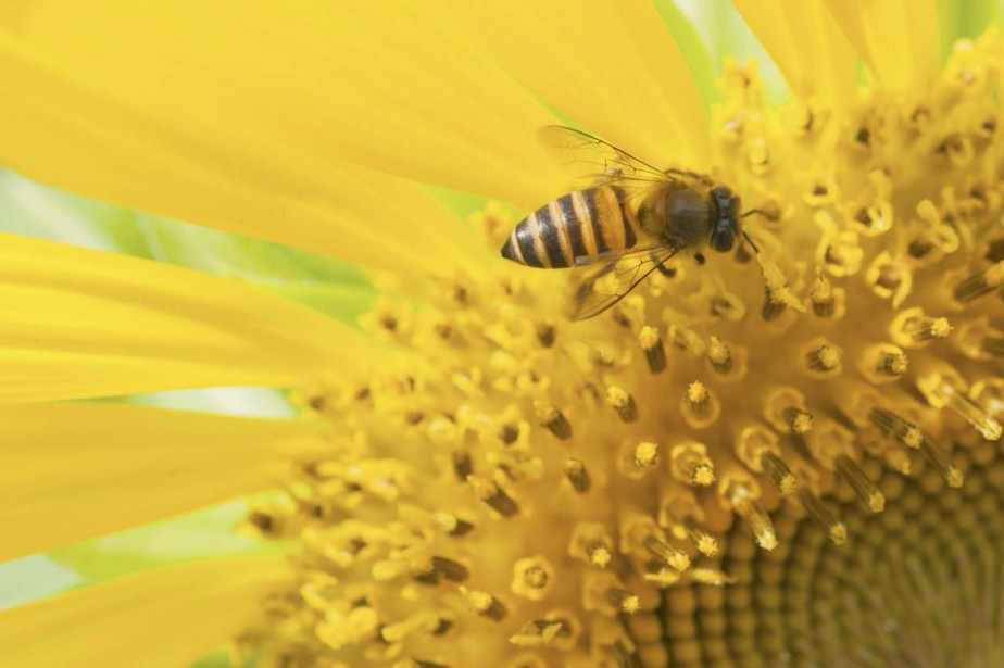 «Notre planète a peut-être plus besoin d'une abeille... (PHOTO THINKSTOCK)