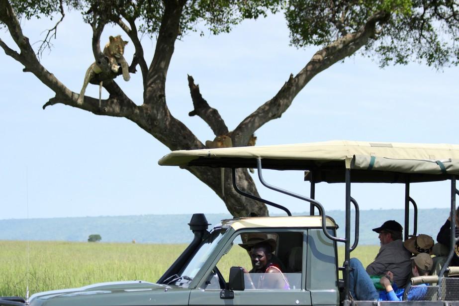 Safari (aussi appelé <i>game drive</i>) et aventuresdans la réserve nationale du Massaï Mara, au Kenya. (Crédit photo: Sarah-Émilie Nault)