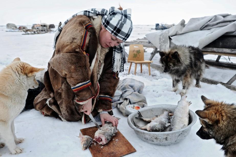 Les femmes nomades préparent du poisson congelé avant la migration. (Photo courtoisie, Fabrice Dimier)
