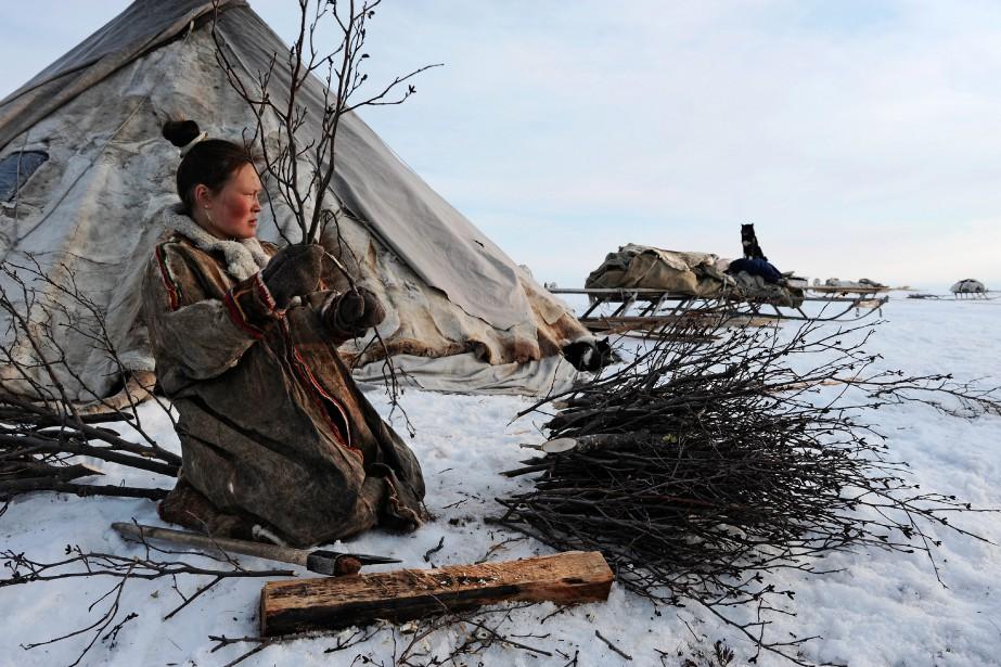 Chez les Nenets, la collecte du bois et l'entretien du feu dans le foyer incombent aux femmes. (Photo courtoisie, Fabrice Dimier)