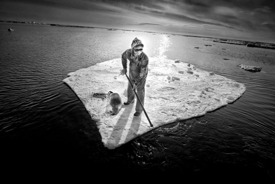 À Terre-Neuve, en 2014, un chasseur de phoques au travail. (Photo courtoisie, Yoanis Menge)