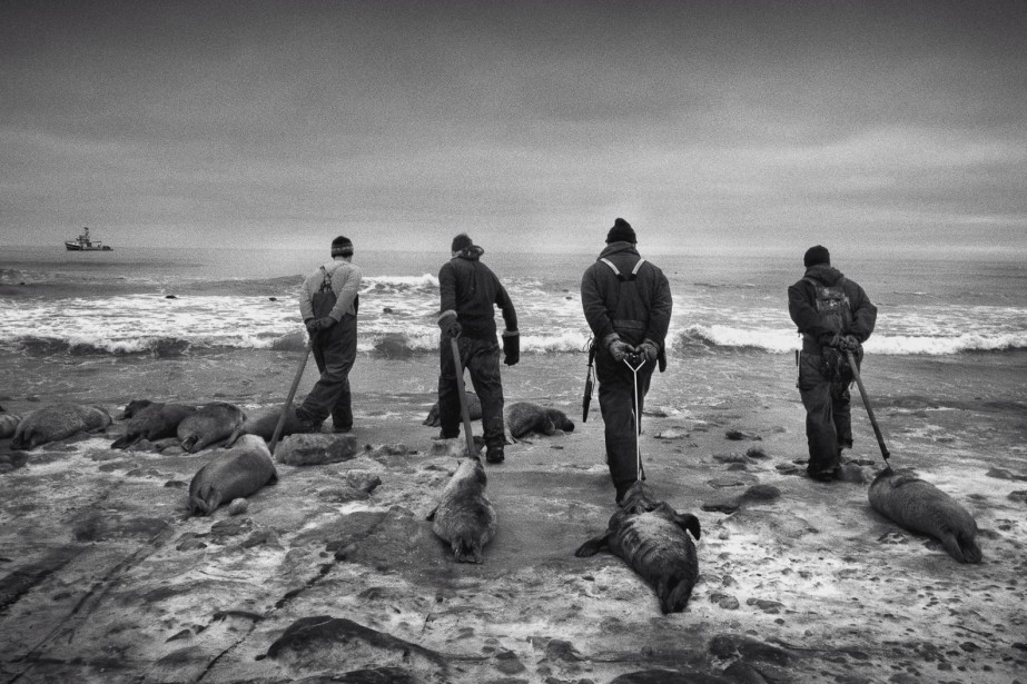 <span><span><span>Le photographe madelinot Yoanis Menge s'est totalement investi dans ce reportage sur la chasse aux phoques; jusqu'à devenir chasseur lui-même. Une aventure qui laisse, dans une oeuvre puissante, une vision résolument personnelle sur un sujet polémique.</span></span></span> (Photo Yoanis Menge)