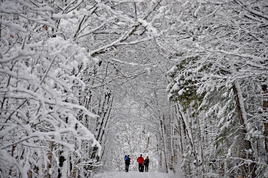L'ambiance était féérique, alors qu'un épais givre blanc recouvrait jusque dans leurs moindres détails chacune des branches survolant les sentiers. (Le Soleil, Pascal Ratthé)