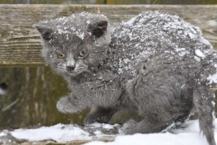 Un chat surpris par la tempête à Trois-Rivières (Le Nouvelliste, Stéphane Lessard)