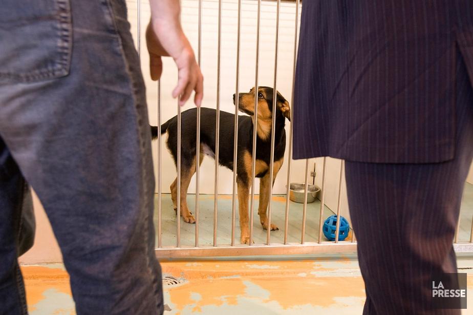 Sur cette photo, un chien attend d'être adopté... (David Boily, archives La Presse)