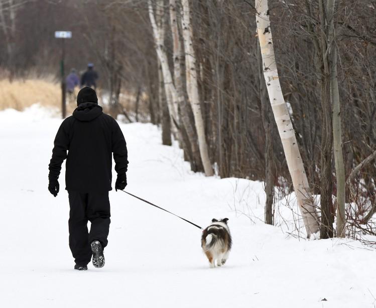 Les pitous aussi ont profité du lendemain de Noël pour faire un peu d'exercice. Ils étaient nombreux dans les sentiers du parc Rivière-du-Moulin de Chicoutimi. (Photo Le Quotidien, Rocket Lavoie)