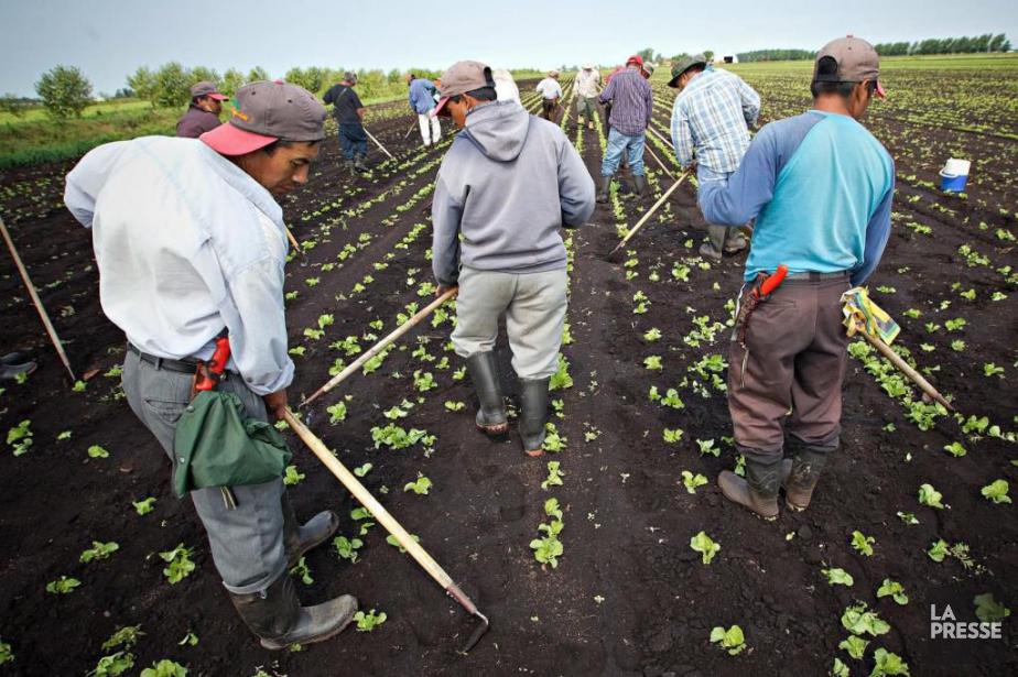Les 13 travailleurs guatémaltèques s'étaient placés dans l'illégalité... (PHOTO PATRICK SANFAÇON, ARCHIVES LA PRESSE)