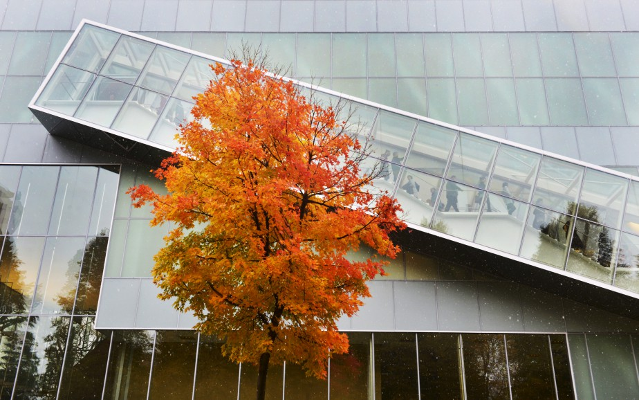 Près du nouveau pavillon Lassonde, du Musée national des beaux-arts, trône un arbre solitaire que notre photographe a immortalisé, en octobre, dans ses magnifiques habits d'automne. (Le Soleil, Jean-Marie Villeneuve)