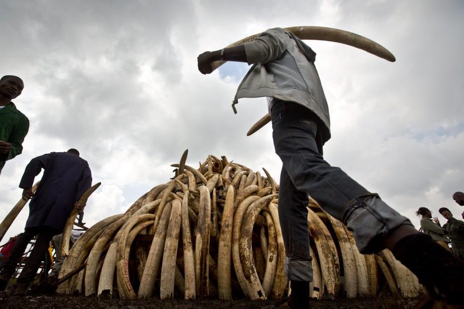L'ivoire africain est très recherché en Chine, où... (PHOTO Ben Curtis, ARCHIVES AP)