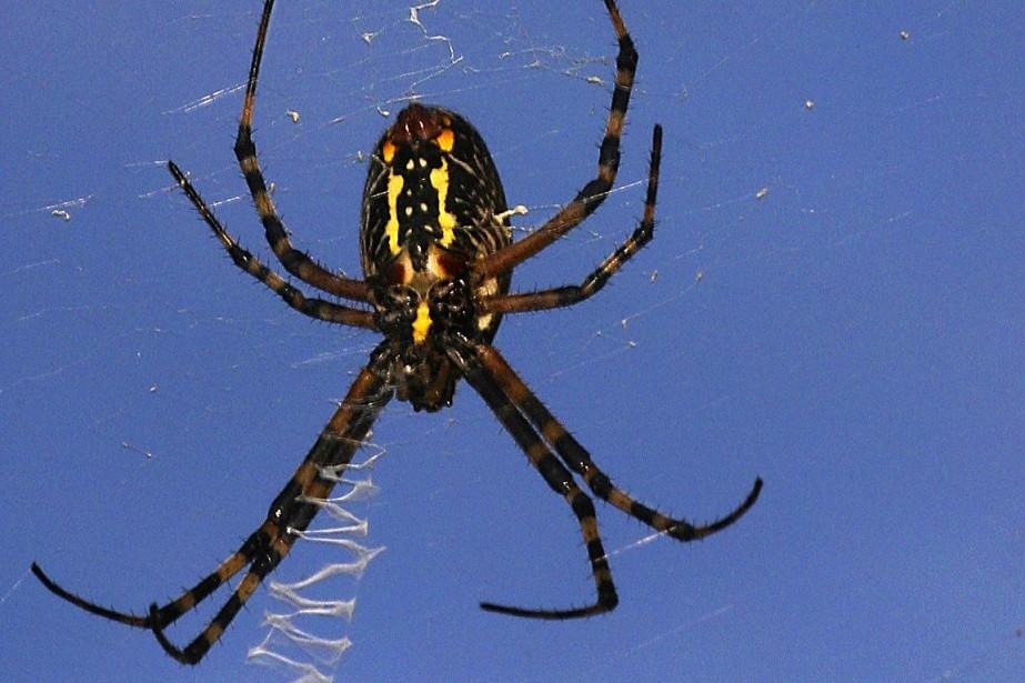 Pour simuler le «canal» de l'araignée, les chercheurs... (Photo Chris Walters, archives AP/Daytona Beach News-Journal)