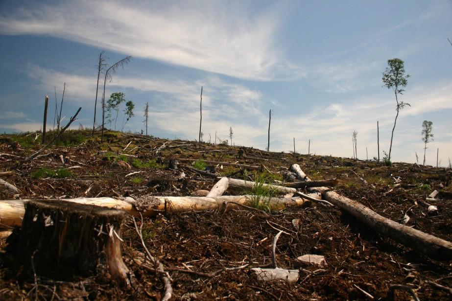 Une forêt dévastée à cause de la contamination... (Photo archives La Presse Canadienne)