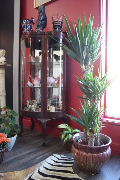 Le Yucca, une plante tropicale demande peu de soin et ajoute au décor une touche d'exotisme. (Mélissa Bradette)