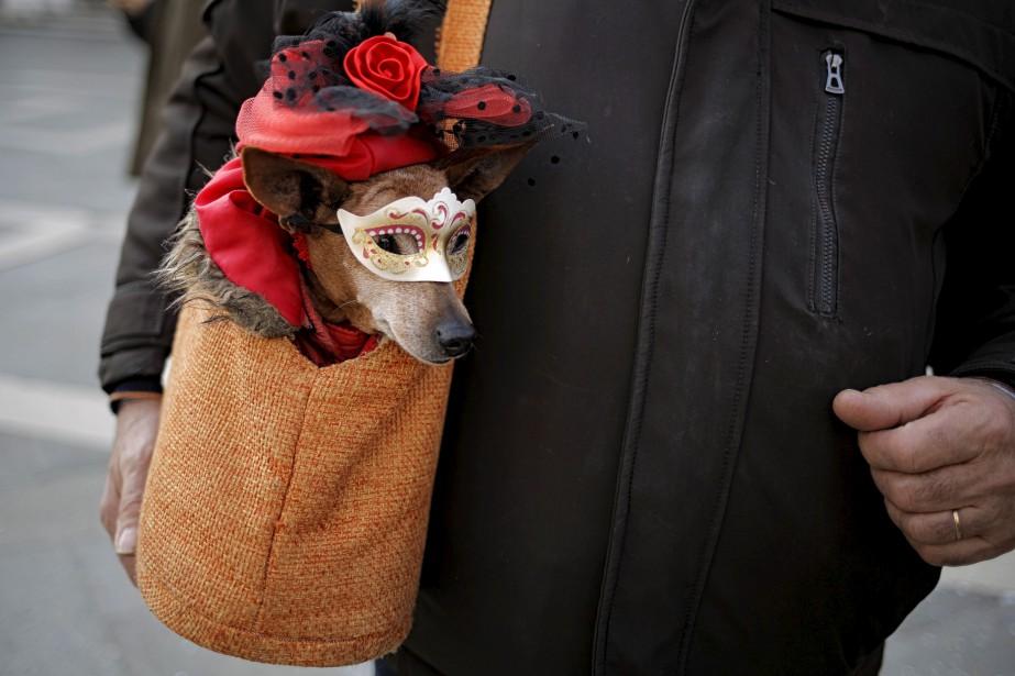 Un chien célèbre le Carnaval de Venise.... | 2017-02-12 00:00:00.000