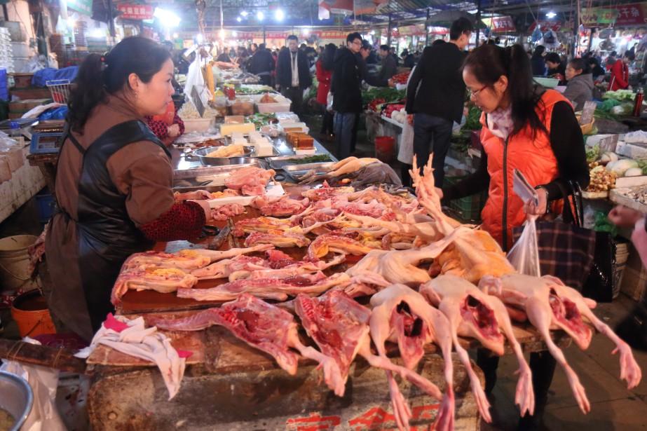 Les volailles sont très prisées en Chine. (PHOTO SYLVAIN SARRAZIN, LA PRESSE)