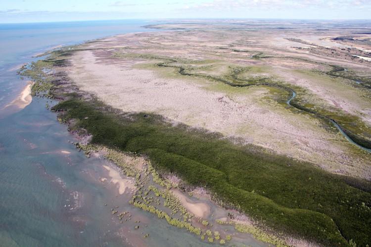 Environ 7% des mangroves de la planète se... (Archives AFP)