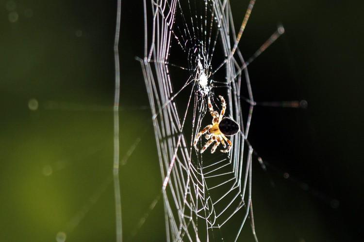 Les araignées consomment dans le monde chaque année entre 400 et... (ARCHIVES AP)