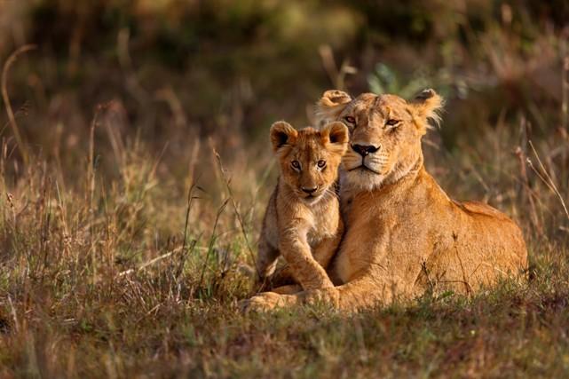 Safari dans une réserve privée, circuit en Afrique du Sud. (VOYAGES TRADITOURS)
