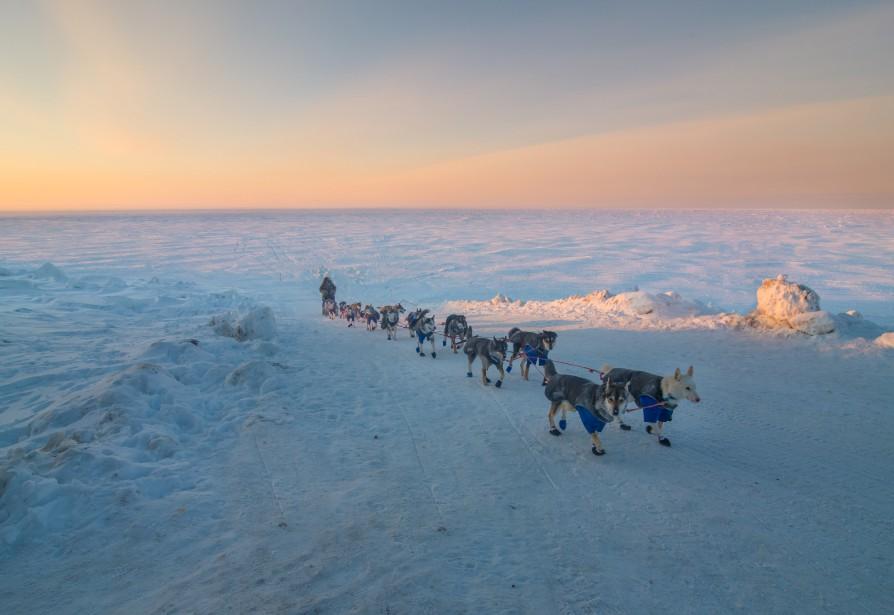Le Parisien Nicolas Vanier approche du fil d'arrivée de la course de chiens de traîneaux d'Iditarod, près de Nome en Alaska. Le Français a terminé au 36e rang de cette course.  | 17 mars 2017