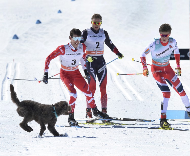 Un chien s'est invité dans l'aventure à la fin du troisième de quatre tours, courant à côté des trois meneurs sur quelques mètres et faisant craindre un accident. | 19 mars 2017