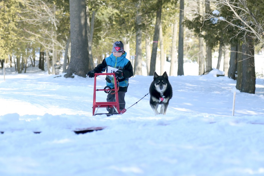 Humains et chiens ont trimé dur au club degolfLesCèdrespour la course du Circuit nordique organisée par Sirius sports canins. | 20 mars 2017