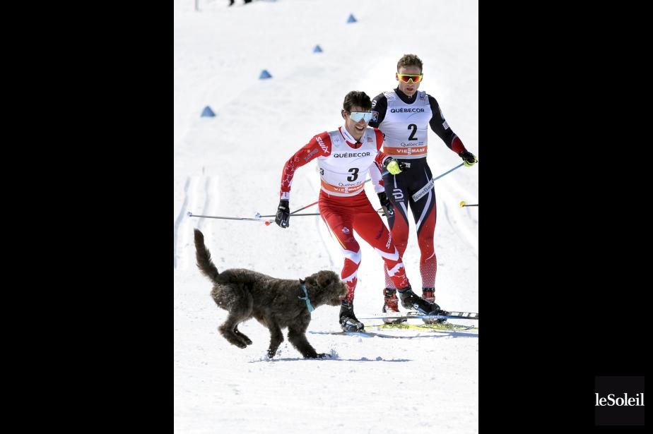 Le 15 km poursuite de la Coupe du monde de ski de fond, sur les Plaines, a donné lieu à un moment cocasse. «Comme photographe, tu es toujours à l'affût d'un moment inusité, alors de voir arriver ce chien-là, sorti de nulle part. La photo a certainement fait le tour du monde», commente Jean-Marie Villeneuve. Pour Alex Harvey et son adversaire norvégien Niklas Dyrhaug, la surprise a été totale.Données techniques : Nikon D4. Focale 300mm. ISO 400, ouverture f8, vitesse 1/3200e seconde | 27 mars 2017
